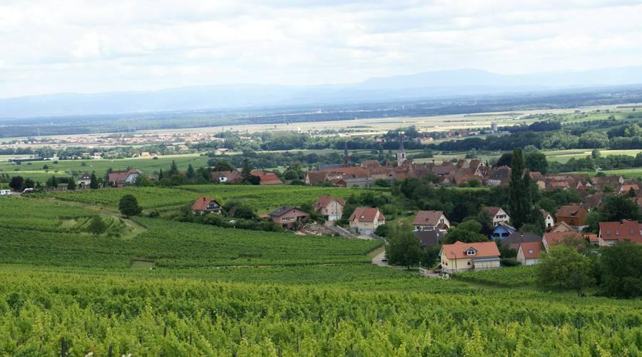 Sentier viticole